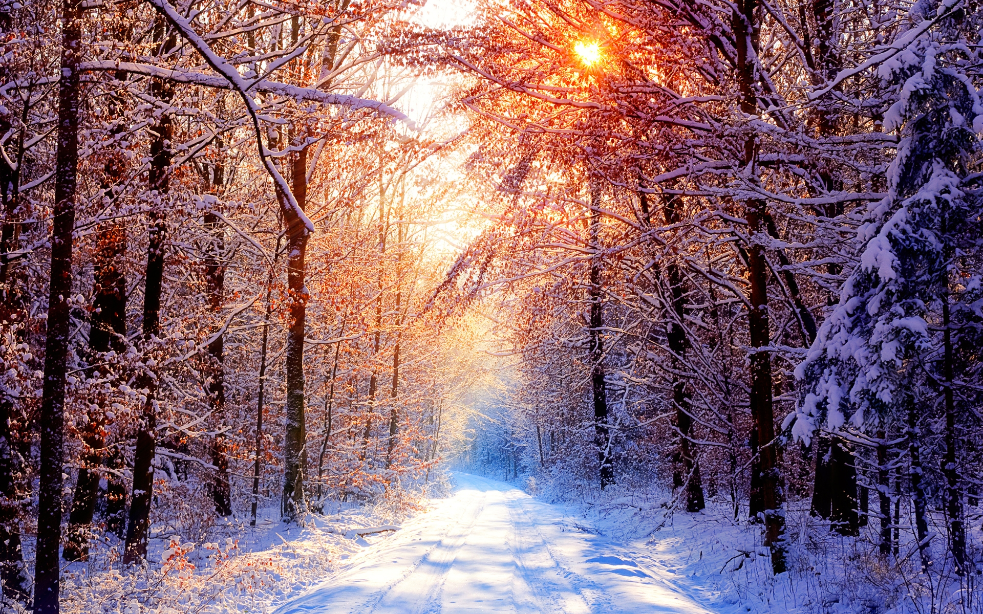 Daily Wallpaper Snowy Forest Road On A Beautiful Winter