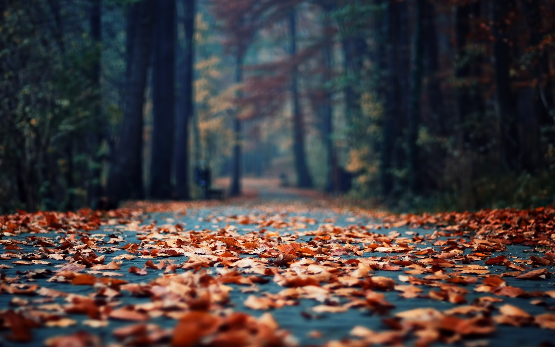 Daily Wallpaper: Fall Leaves