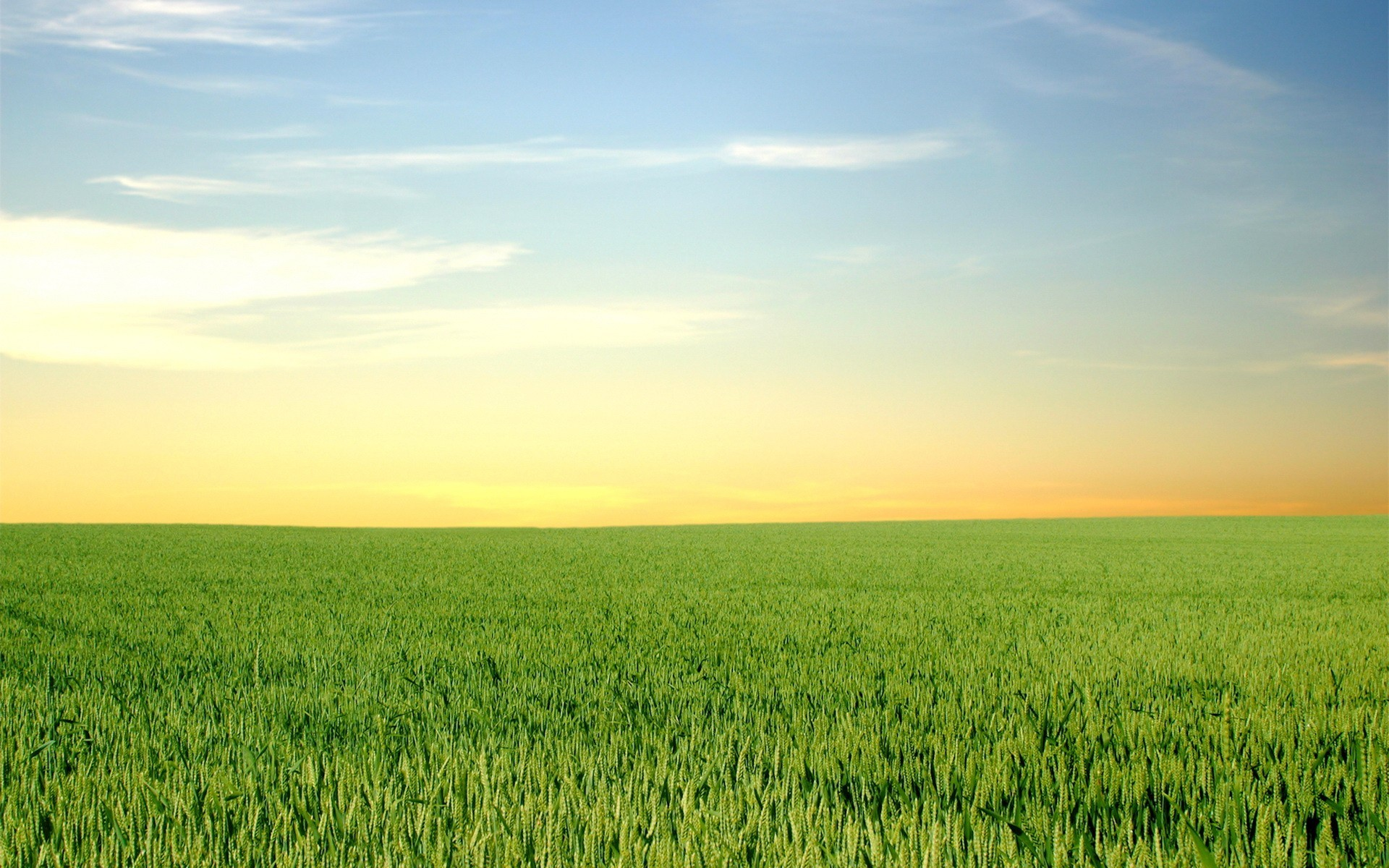 Daily Wallpaper: Green Fields And Blue Skies