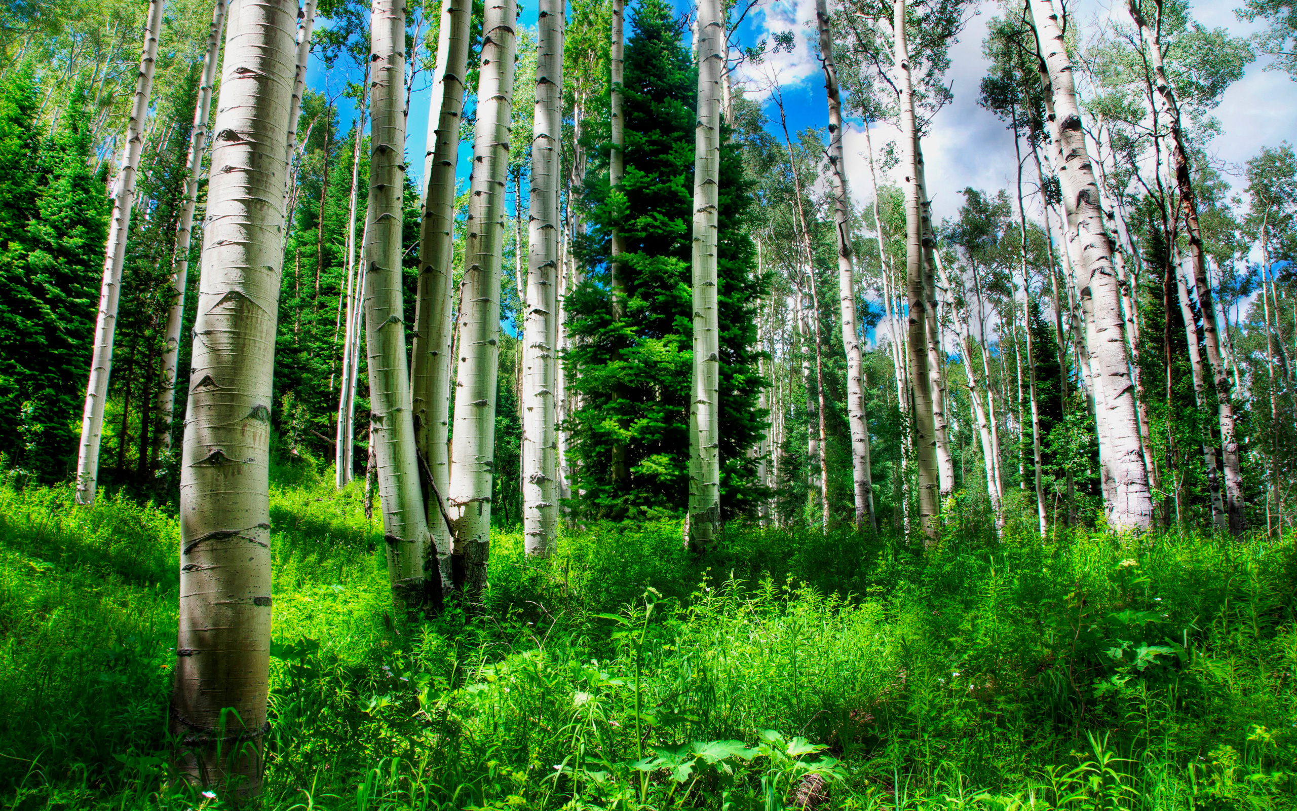 daily wallpaper forest i like to waste my time