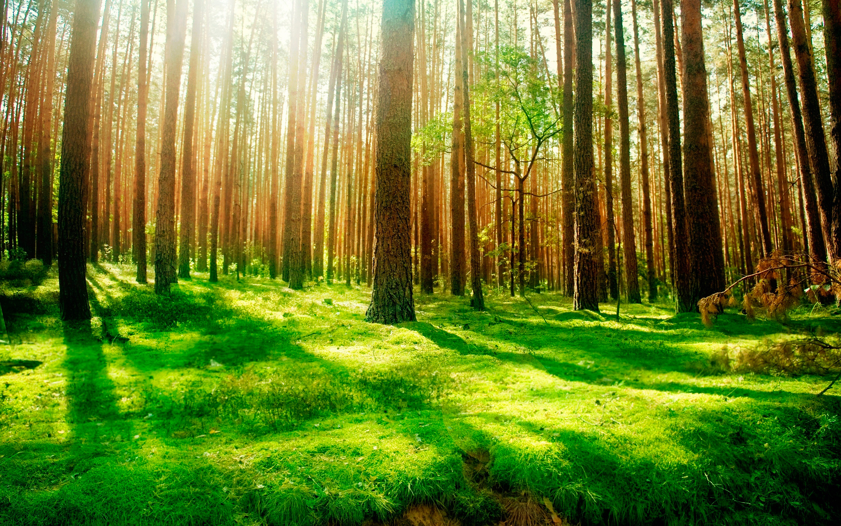 Daily Wallpaper Forest Scenery