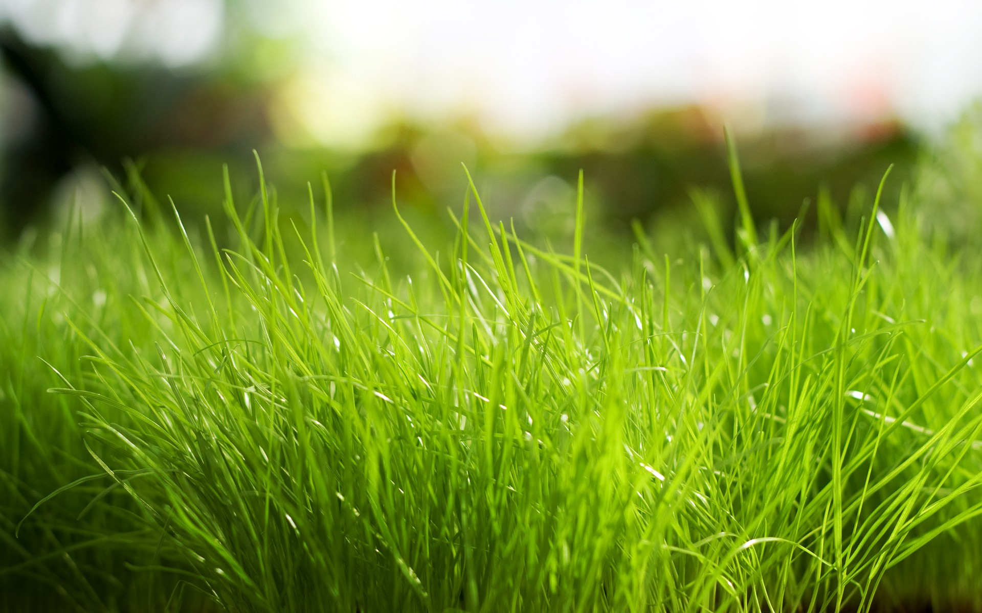 Daily Wallpaper Fresh Grass I Like To Waste My Time