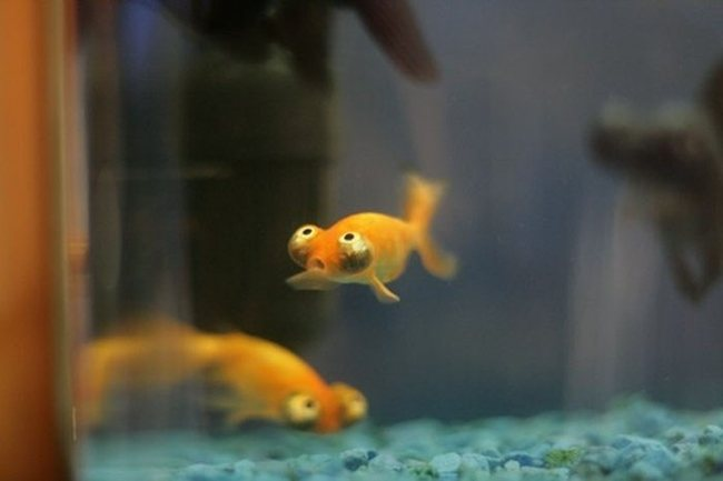 Funniest looking fish in the world i like to waste my time for Funny fish pictures