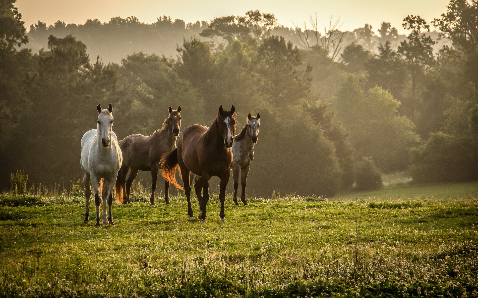 Daily wallpaper horses in the wilderness i like to waste my time voltagebd Images