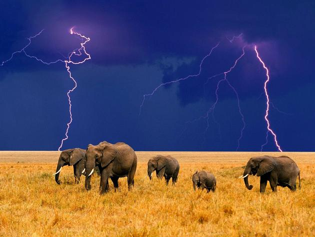 Elephants during a storm