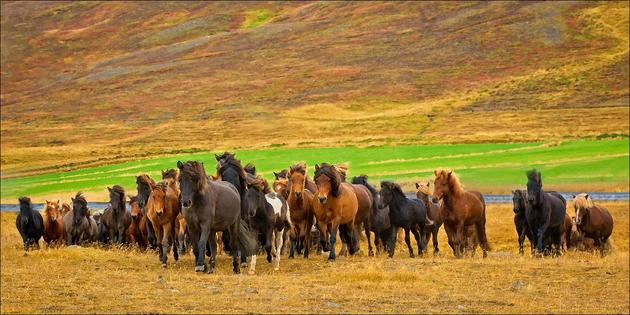 Horses in a big open plain