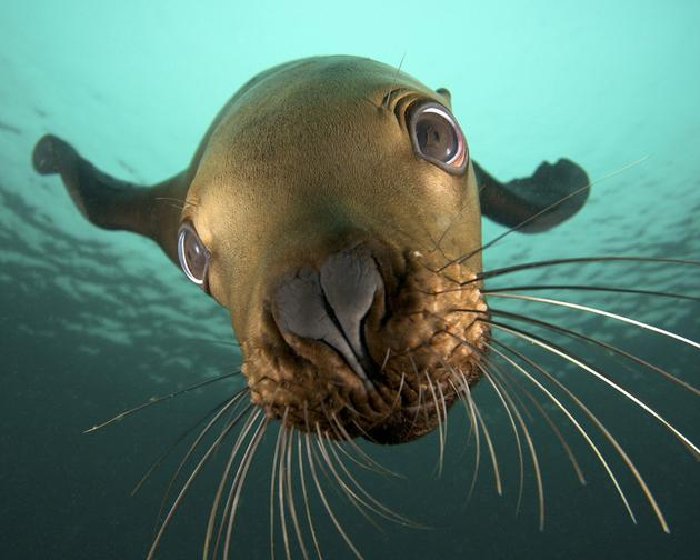A seal underwater