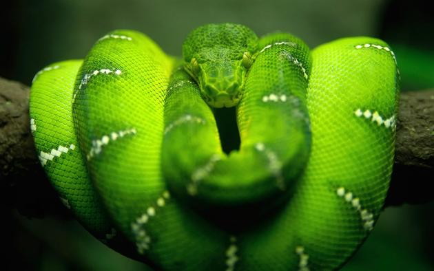 Really cool green snake