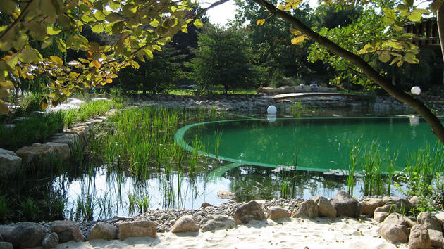Beautiful treed natural pool