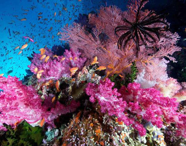 spectacle of colours underwater photo