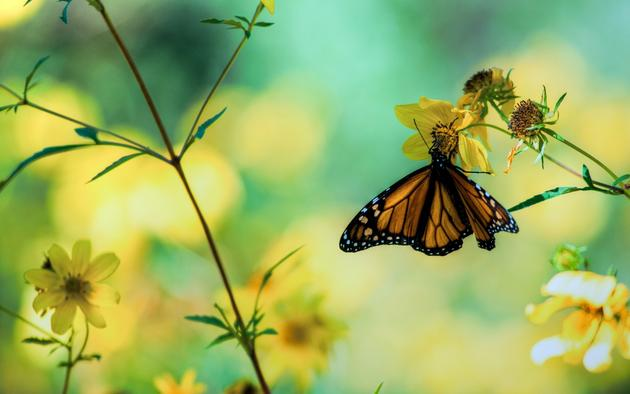 Macro HD Wallpaper butterfly nature