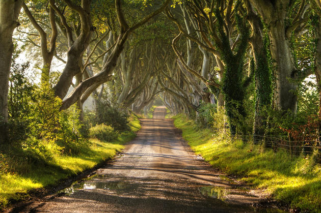 Dark Hedges Alley in Ireland Summer