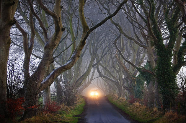 Dark Hedges Alley in Ireland Foggy