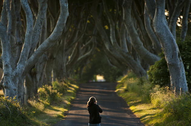 Dark Hedges Alley in Ireland Spring