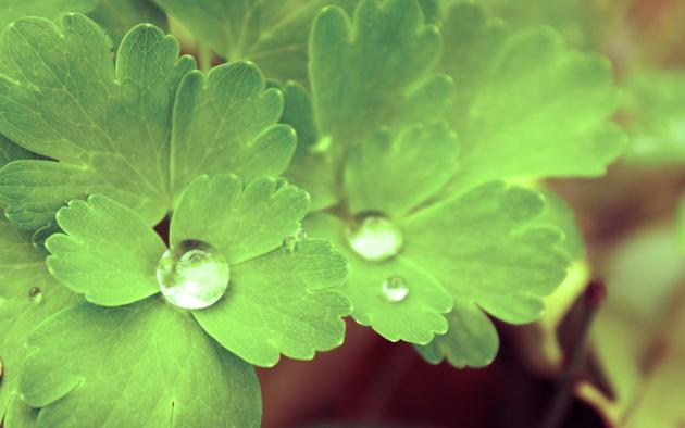 Dew Leaves HD Wallpaper
