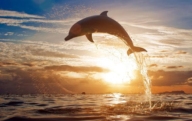 Dolphin in Florida Air Time Wallpaper