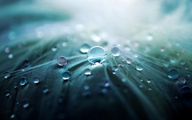 Feather droplets wallpaper