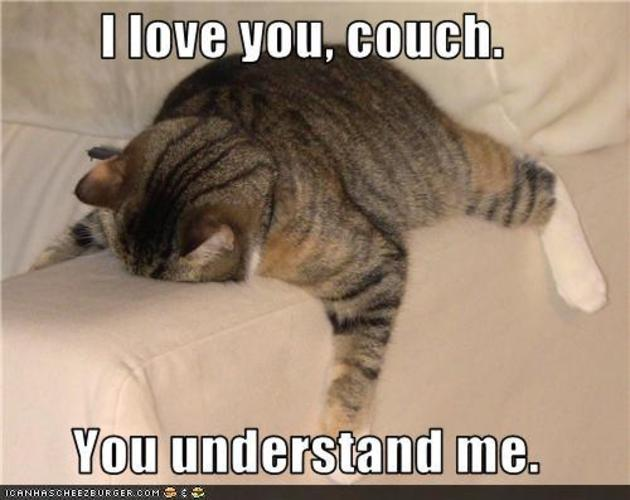 couch is this cats best friend