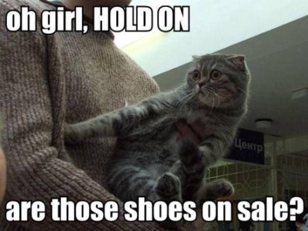 [Image: funny_epic_cats_are_those_shoes_on_sale.jpg]