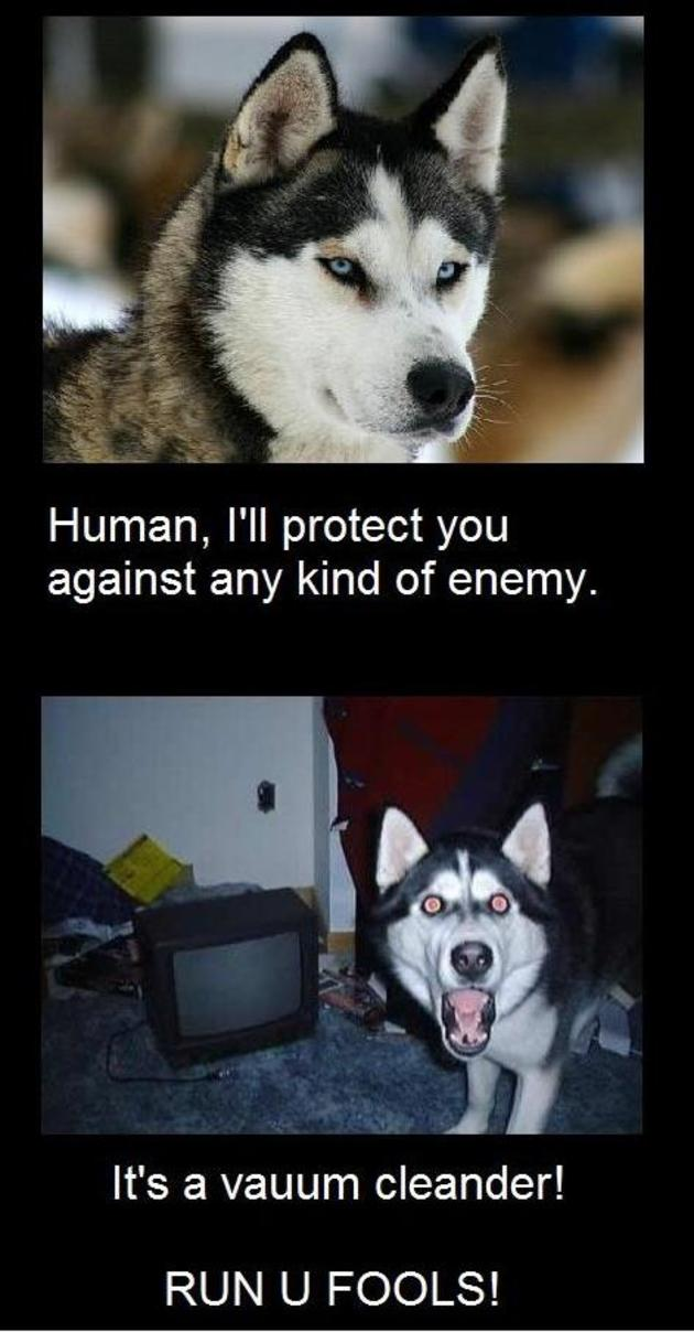 dogs explained epic