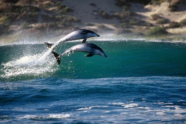 Dolphin Photo by Greg Huglin