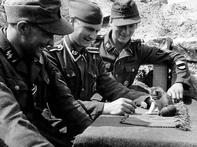 German Soldiers playing with a kitten 1943