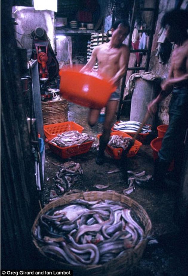 A fish processing shop inside of the Kowloon City
