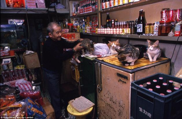 A store inside of the Kowloon City. Cats everywhere.