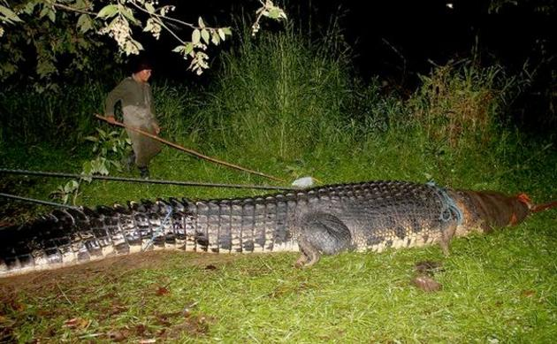 record size crocodile