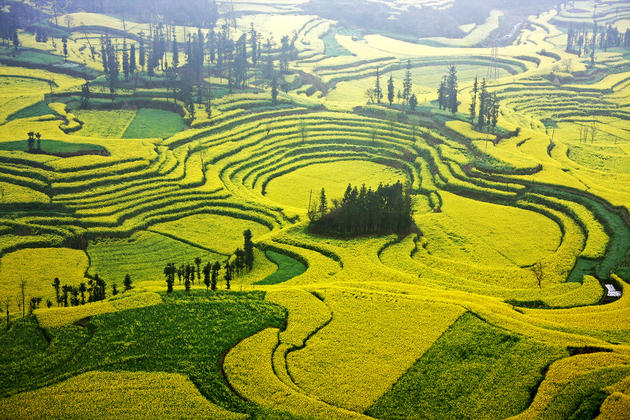 Cascading fields of Luoping China