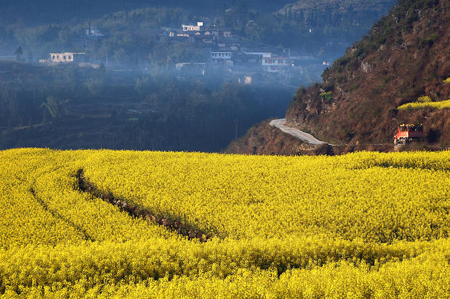 Stormy weather over Yellow Fields of Luoping