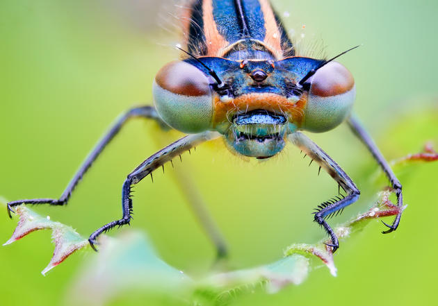Macro insects photos by John Hallmén