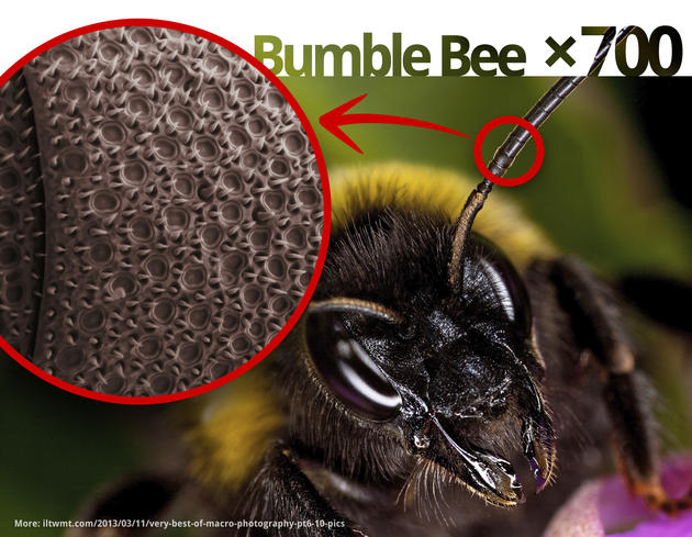 Bumble Bee Antenna