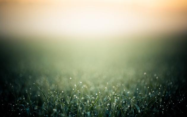 Eearly morning dew on grass HD Wallpaper