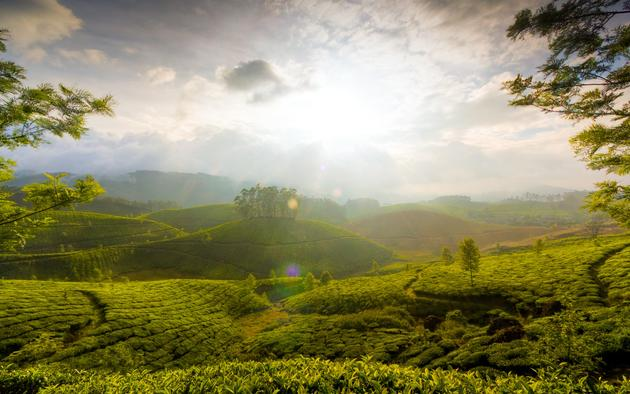 Munnar, India HD Mac PC Wallpaper