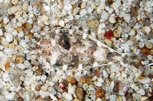 Extremely camouflaged fish on surface of ocean