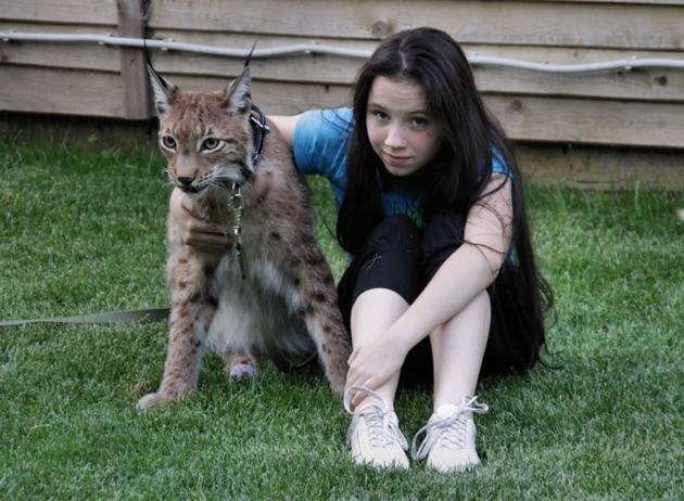 The Ownership Of A Pet Lynx 7 Pics I Like To Waste My Time