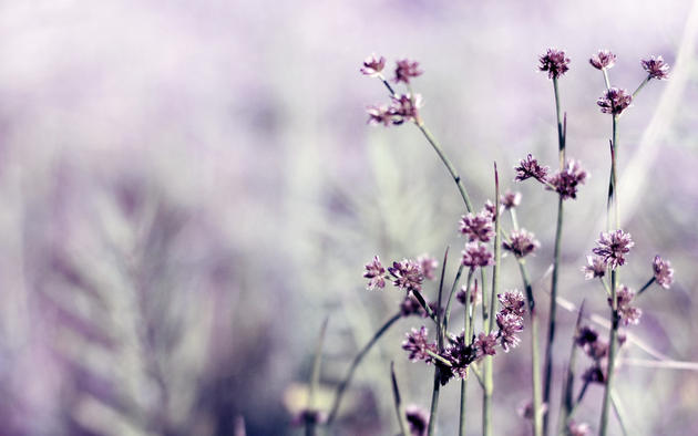 Daily wallpaper little purple flowers i like to waste my time purple flowers wallpaper mightylinksfo