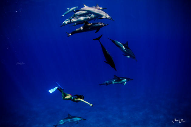 Dolphins and humans swimming underwater