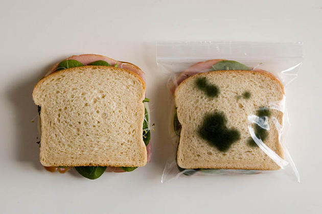 Moldy Bag for Sandwiches