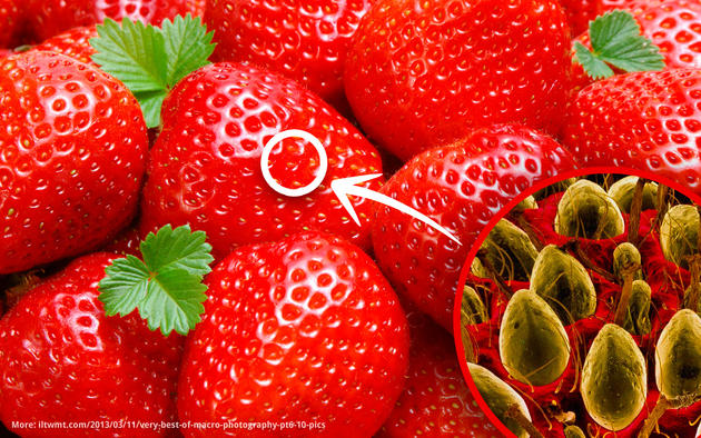 Strawberry macro and electron microscope photo