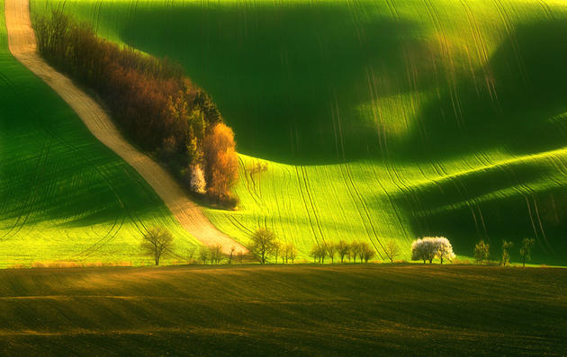 Moravia Green Fields