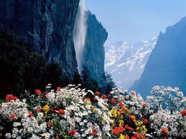 Mountain flowers, Switzerland