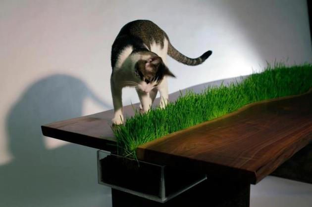 Table With Removable Planter (and a cat)
