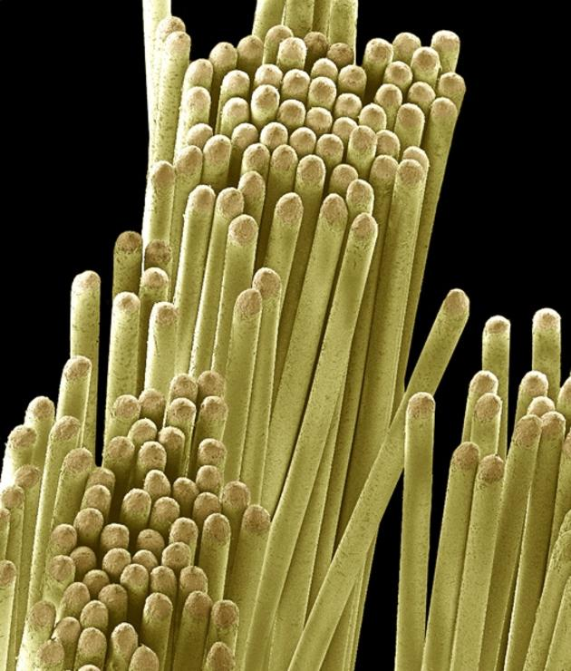 Toothbrush magnified