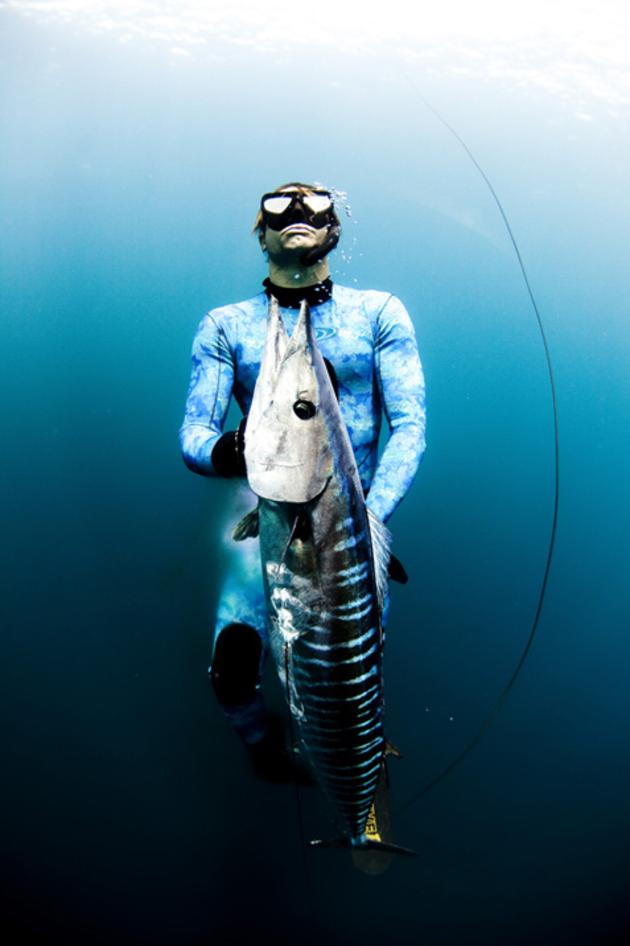 Barracuda caught with spear