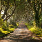 Dark Hedges Alley in Ireland