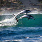 Stunning Dolphin Photo