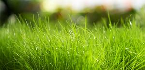 Fresh Grass HD Wallpaper