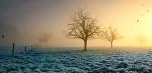 Frosty Grass Crows HD Wallpaper